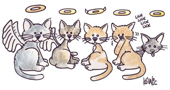 cats_angels_001.JPG